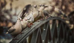 How To Get Rid Of Pigeons Off My Roof by Bird Deterrents Why Uv Light May Not Be The Answer Blog Bird B