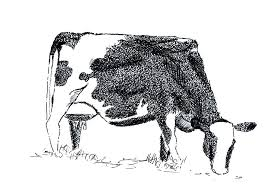 cow sketch in pen three color disasters