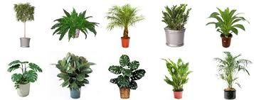 natural plants and their impact on indoor air quality u2013 indoor air