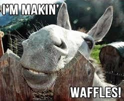 35 best funny donkey pic images on pinterest donkey donkeys and ha ha
