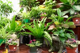 home plants indoor plants in the garden u2022 pittsburg kansas
