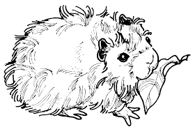 guinea pig clipart black and white clipartxtras