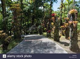 Botanical Gardens In Nc by Botanical Garden Balata Jardin De Stock Photos U0026 Botanical Garden