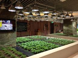 indoor veggie and herb garden at k11 mall in shanghai restaurant
