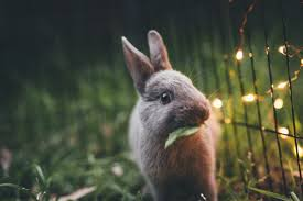 bunnies for easter why you should stick with chocolate bunnies for easter