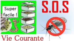 comment faire partir des moucherons dans une cuisine comment faire partir les moucherons sans huissier