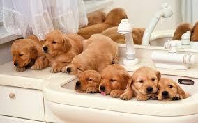 most beautiful cute dog puppies hd wallpapers for desktop u2013 hd