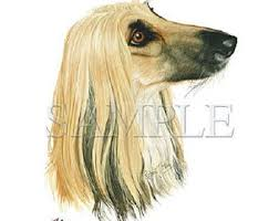 afghan hound in clothes afghan fabric etsy
