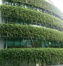 file green wall li ka shing library singapore management