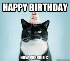 funny birthday cat memes cat humor pinterest birthday cats