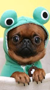 in costumes best 25 puppies in costumes ideas on
