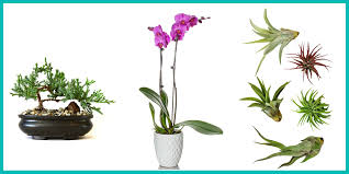 10 plants you can buy on amazon shop for houseplants and