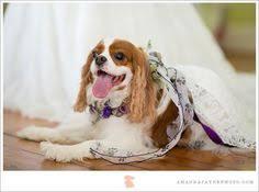 wedding flowers jacksonville fl bar wedding tips tips for brides jacksonville fl wedding