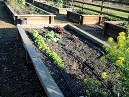 the farmer fred rant growing your first vegetable garden some tips