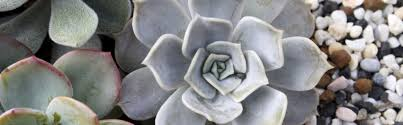 the home depot xeriscaping 4 things to know for water conscious