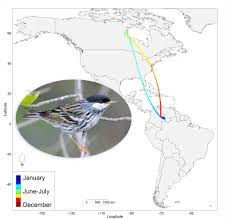 analysis big data reveals big picture of migration all about birds