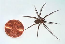 spider bit katt williams sets up make up date march 1 for sunday u0027s