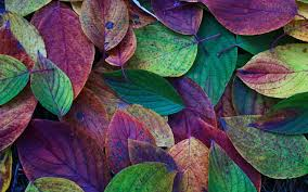 Colorful Pictures Leaves Macro Sunset Search Results Page 6 Eskipaper Com Cool