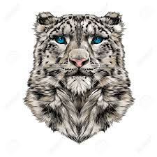 the head of the snow leopard full face symmetry color drawing