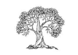 tree symbolism the symbolic meaning of oak trees houston tree transplanting co