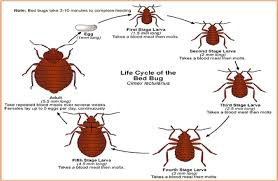 Bug Bombs For Bed Bugs Bed Bug Information For Fire Departments U2013 Cobbtf