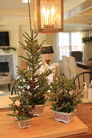 jenny steffens hobick mini christmas trees in planters easy diy