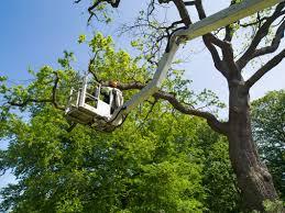 tree pruning shreveport la specialty tree care