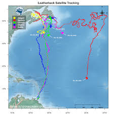 Trinidad On World Map by Canadian Sea Turtle Network Www Seaturtle Ca