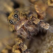 Sad Spider Meme - fancy alien monsters or awesome spiders i just love these little