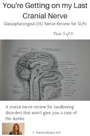 best 25 glossopharyngeal nerve ideas on pinterest cranial nerve