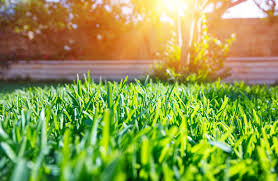 get your lawn ready for spring greenwich ct