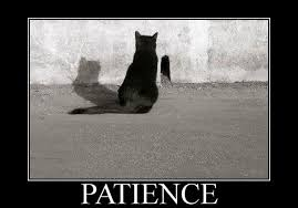 Patient Bear Meme - patience lex fridman