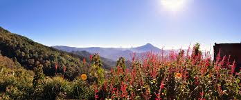 volcano flowers free images tree nature forest horizon sky wood sun trail