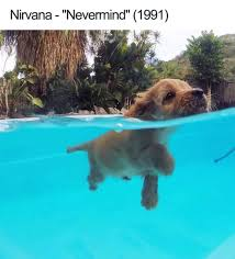 Dog Funny Meme - 27 ridiculously happy dog memes to brighten your day blazepress