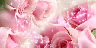 walppar madre pink roses wallpapers full hd wallpaper free download good