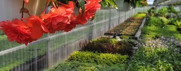 Regal Home And Garden Decor Regal Florist Mixed Planter Tropicals Indoor Plant Sympathy