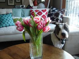 dog and hardwood floors two pitties in the city decor quest for the perfect dog bed and