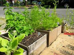 31 best container gardening images on pinterest vegetables