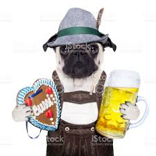 bavarian german pug dog stock photo 482123286 istock