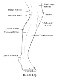 human leg front view coloring page free printable coloring pages