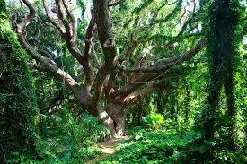 vine covered tree photograph by szerlag