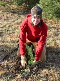 eisele christmas tree farm