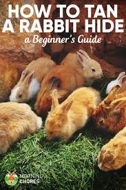 tanning rabbit hides easy guide to skin a rabbit and tan the hide