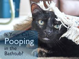 is your cat pooping in the bathtub or shower pethelpful