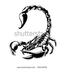 What Do Scorpion Tattoos Scorpion Stock Images Royalty Free Images Vectors