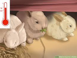 care rabbit pictures wikihow