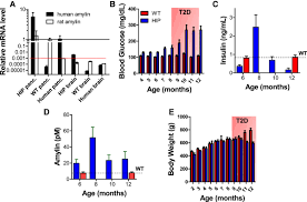 810 1750 S by Neuroinflammation And Neurologic Deficits In Diabetes Linked To