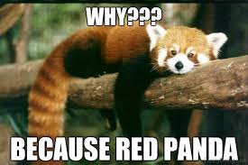 Sad Panda Meme - images of why so sad panda fan