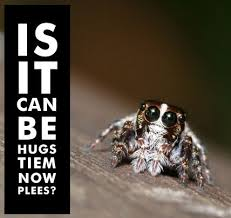 Cute Spider Meme - dear science please please name this dancing spider after