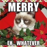 Grumpy Cat Memes Christmas - 19 best grumpy cat christmas memes images on pinterest grumpy